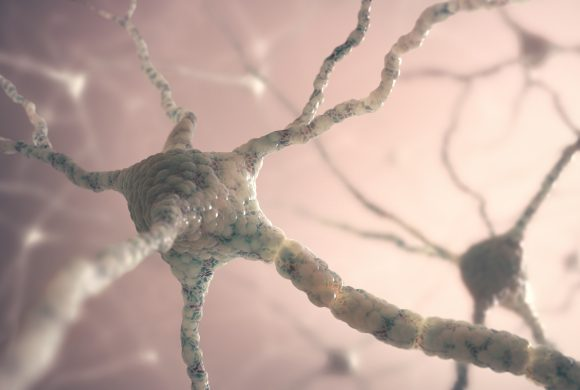 The Strength of Brain's Connections